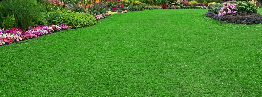 perfect-lawn-image