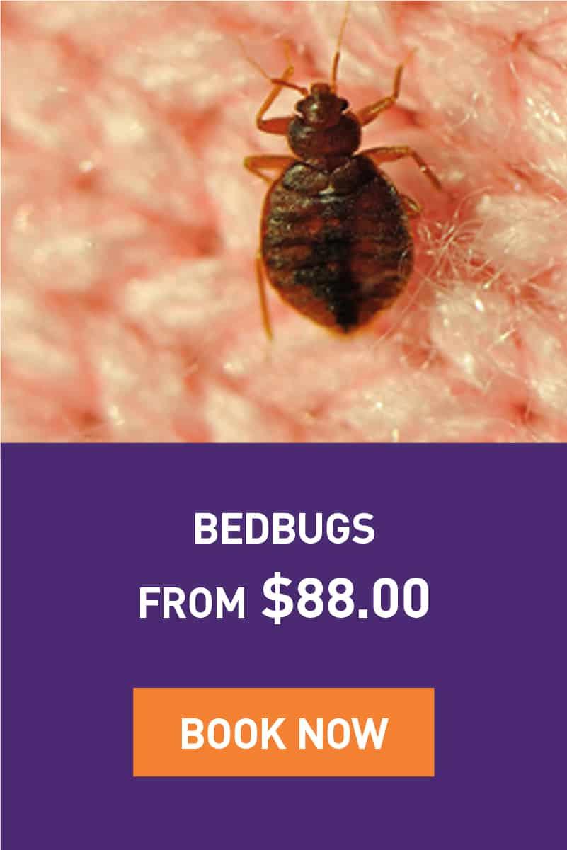 bedbugs-promotion