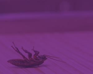 pest-control-square